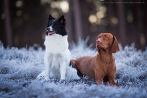 Caty und Lord